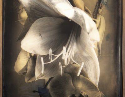 Künstler Casper Faassen - Fleurs-du-mal-1-130x80-high-res- Galerie Hegemann