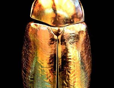 ANOUK, Golden Scarab, 2019, Aludibond, gerahmt, Museumsglas, Auflage 7, 117 x 87 cm - Galerie Hegemann